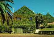 Озеленение в Новой Зеландии