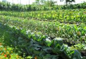 Совместимость растений