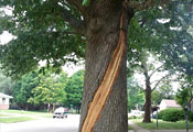 След от молнии на дереве