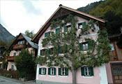 Дерево на шпалерах в Австрии