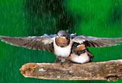 Забота у птиц
