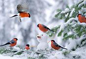 Снегири и снеговик