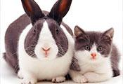 Котёнок и кролик