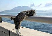 Кот и море