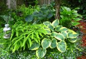 Светлолистные растения