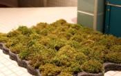 Живой коврик из мха для ванной