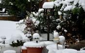 Декабрь в саду