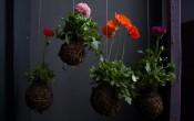 Висячие сады (кокедама) Федора ван дер Валька