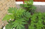 Помогите определить растение на грядке