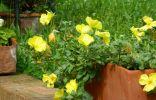 Незнакомый цветок