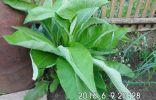 Что за растение у меня в огороде?