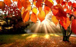 Календари на октябрь