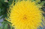 На даче растет такой вот цветок. Кто знает его название?