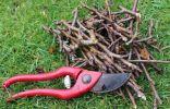 Как правильно обрезать ветку куста или дерева