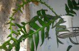 Помогите определить что это за растение