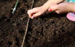 Весенний посев овощей в открытый грунт