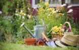 Летний уход за многолетними цветами