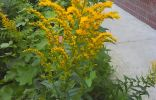 Как называются эти цветы