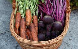 Урожай свёклы и моркови