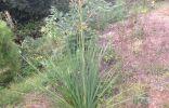 Прошу опознать растение