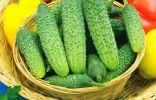 Партенокарпия, гибриды и ГМО