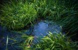 Участок с высокими грунтовыми водами