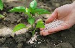 Внесение комплексных минеральных удобрений