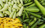 Выбор сорта кабачка