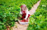 Биозащита растений в период вегетации