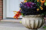Каменные цветочницы