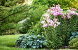 Цветник из лилейников, лилий и хост