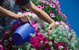 10 секретов пышно цветущего балкона