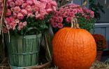 Осенние цветы для контейнерного сада