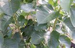 Помогите определить дерево или куст