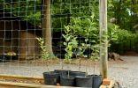 Когда лучше сажать саженцы плодовых культур?