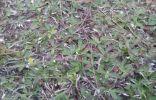 Что за трава?