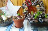 Гиацинты и тюльпаны под ёлочку