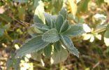 Кто узнает растения из Ессентуков