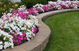 Моноцветники в дизайне сада — виды, особенности создания и выбор растений