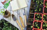 60 лучших статей о выращивании рассады