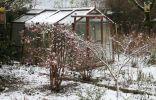 Ранневесенняя защита сада от вредителей и болезней