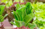 9 лучших овощных салатов, которые стоит посеять уже в этом сезоне