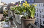 Весенние луковичные цветы на балконах и лоджиях