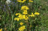 Помогите распознать три растения