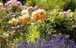 10 цветов, которые наполнят сад неповторимыми ароматами