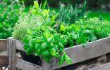 Прованские травы в саду и на подоконнике — выращивание и использование