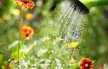 Как помочь растениям пережить жару