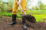 Какая бывает почва, и как её улучшить?