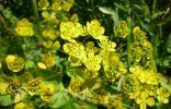 Помогите определить растения Южного Урала