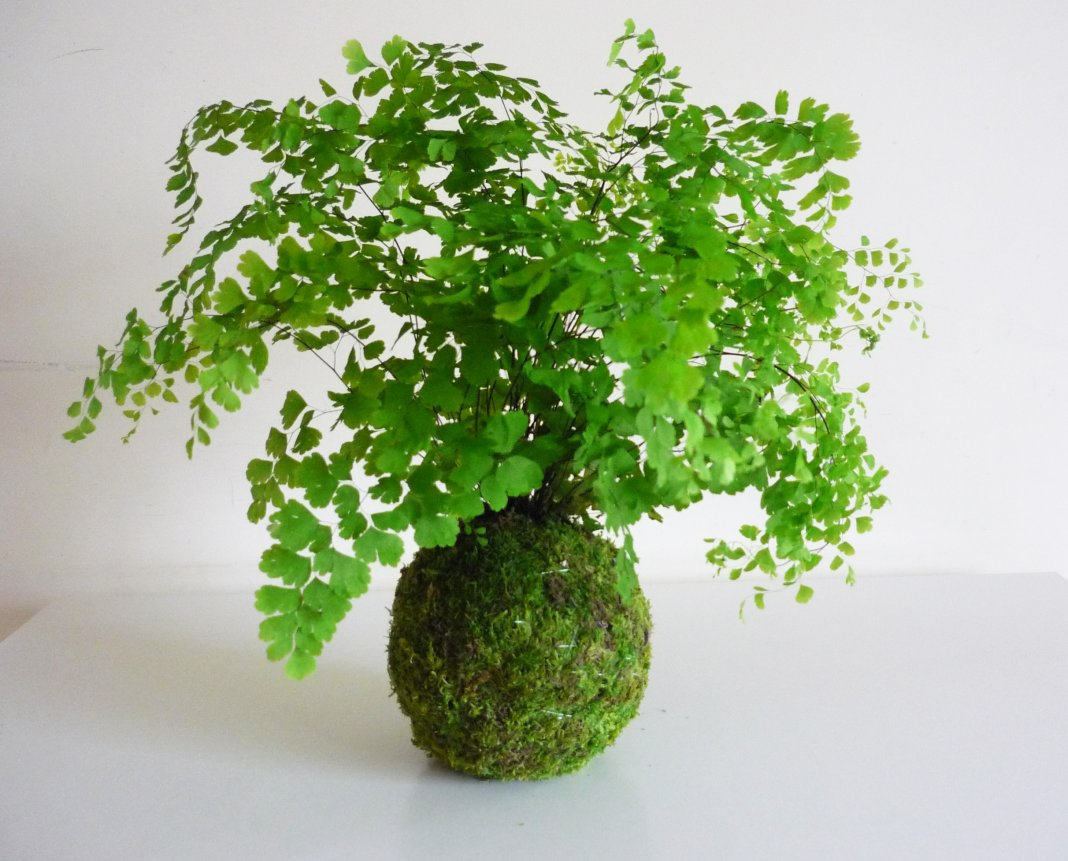 Самые тенелюбивые комнатные растения для северной стороны